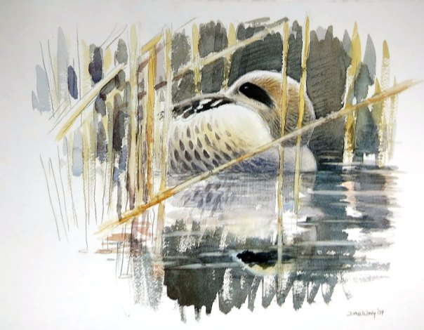 David Daly - Marbled Duck