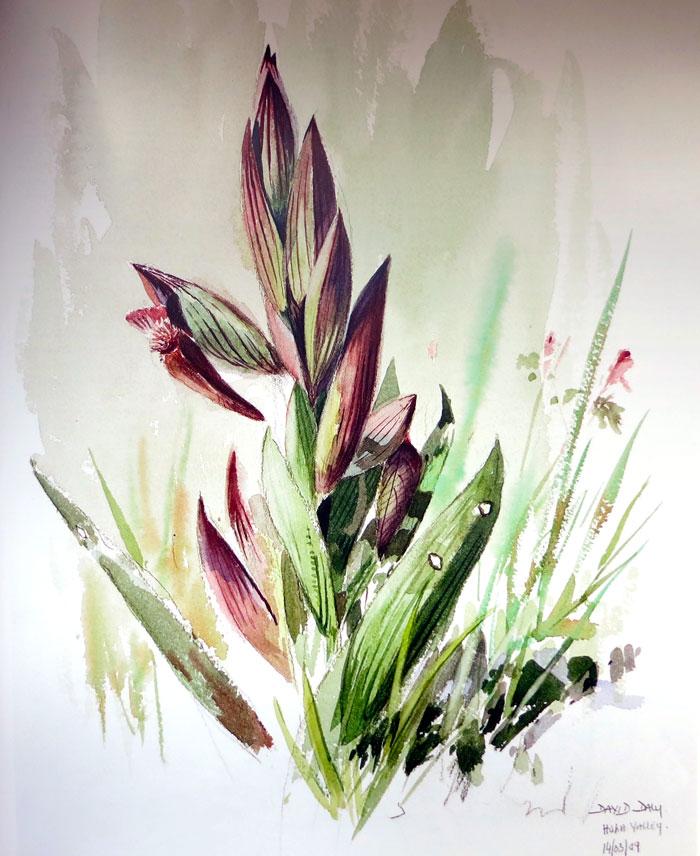 David Daly - Snake tongue orchid