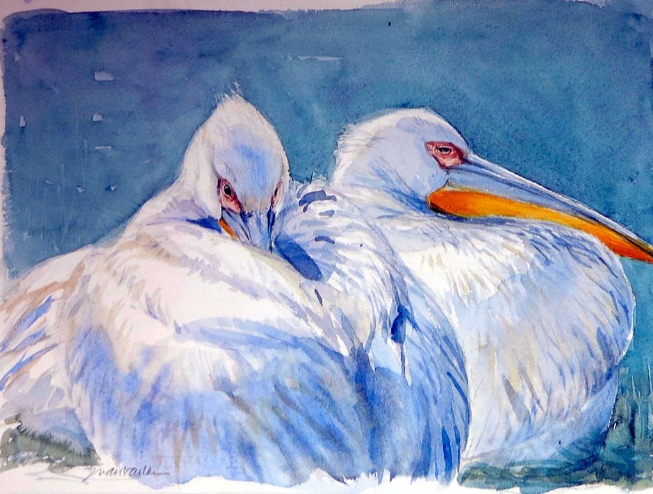 Juan Varela Simo - Pelicans resting