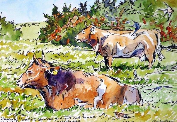 Tim Wootton - Little Sark Cows