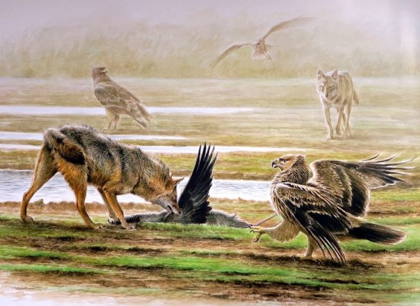 Paschalis Dougalis - Jackals and Eagle feeding on-a dead Crane