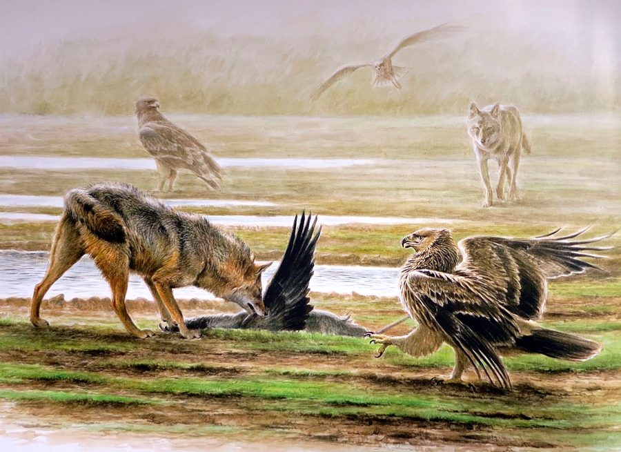 Paschalis Dougalis - Jackals and Eagle feeding on-a dead Crane