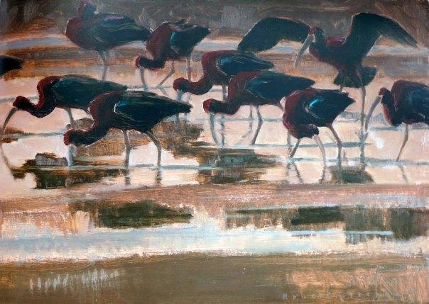 Robert Greenhalf - Glossy Ibis