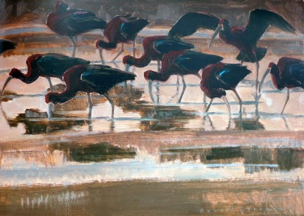 Robert Greenhalf - Glossy Ibis