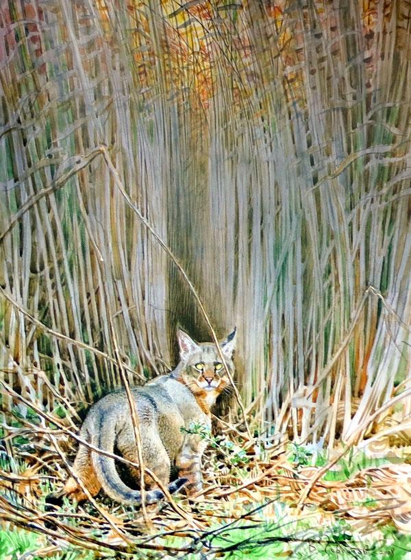 Vadim Gorbatov - Jungle Cat at night