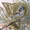 The Desert Sparrow