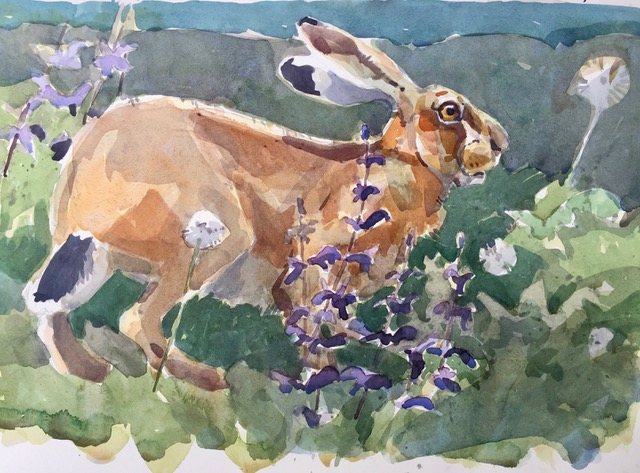 Hare, by Andrew Haslen, England