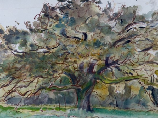 The old oak, by Peter Partington, England