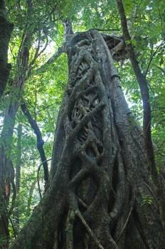 treeweave