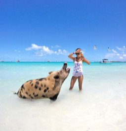 """Feeding """"Big Momma Karma"""" at Pig Beach"""