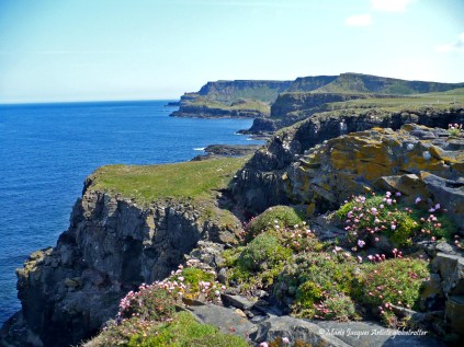 Giant Causeway-7