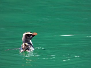 63-Penguin