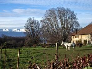 Campagne près de Cologny