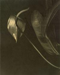 ohne titel (anthurie) by aenne biermann