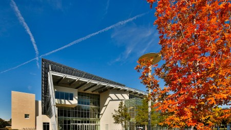 Dallas Museum of Art Launches Art