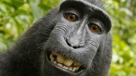Morning Links: Monkey Selfies Edition