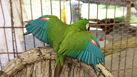 Habitat: Meet Cindy Sherman's Macaw, Jamian