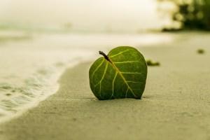 Hoja en la arena de la playa de Mar 9 Azules