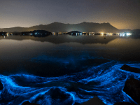 Light Fantastic: Best Places To See Bioluminescence Around The World