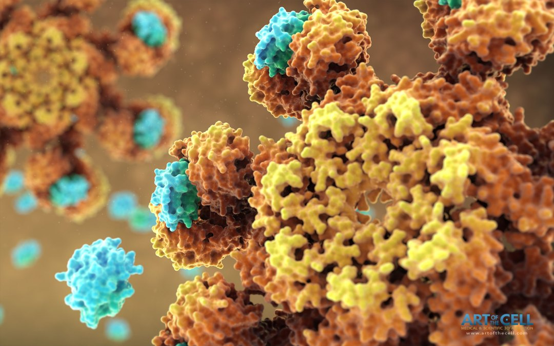 apoptosome molecular medical science video - art of the cell
