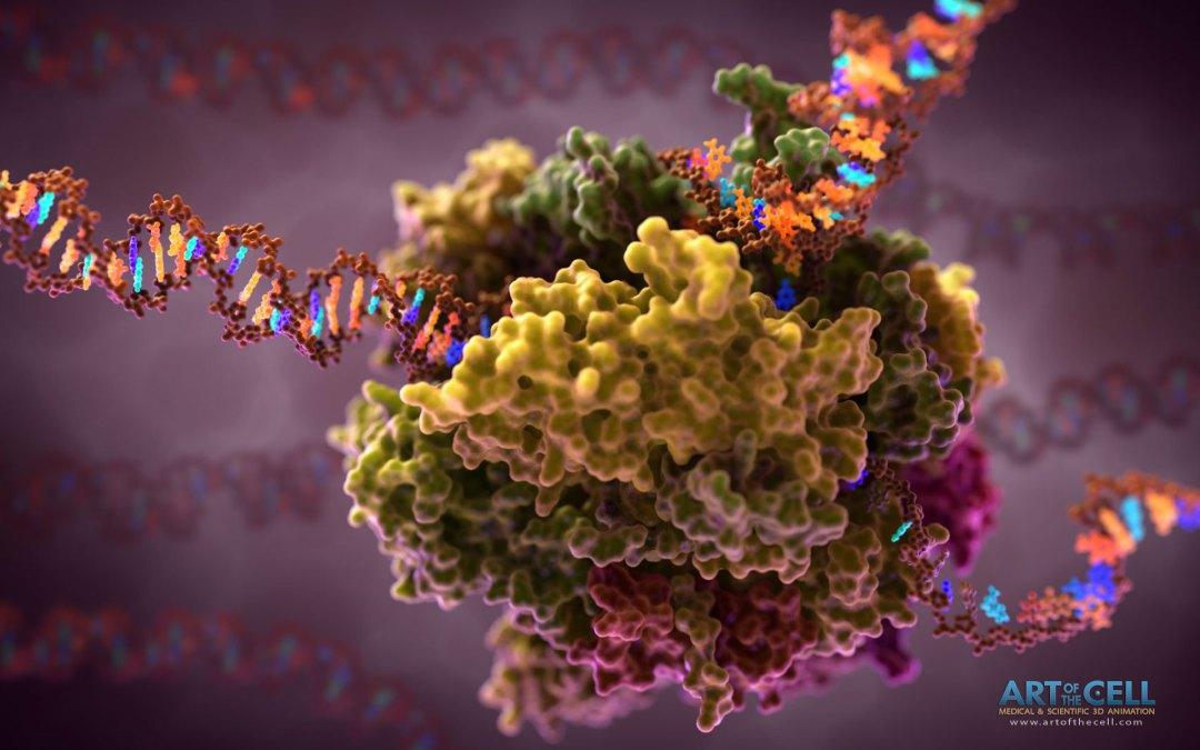 RNA-Polymerase