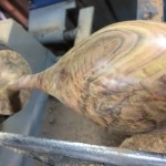 woodturned goblet on the lathe, mallee burl