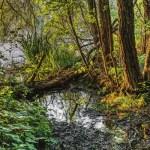 Figure 31 Swamp