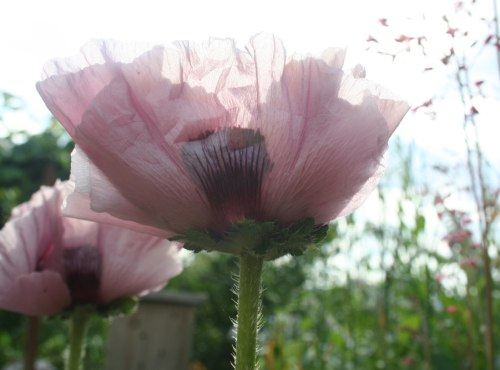 les fleurs du jardin été