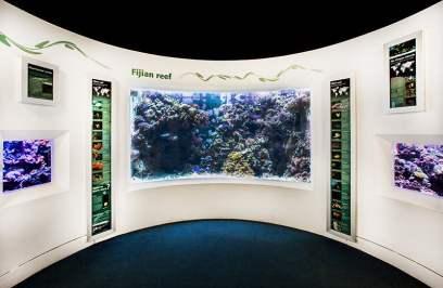 Aquarium October 2015. Image credit: Sophia Spring