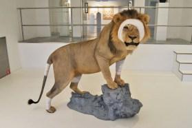 acc-de-chasse-lion-copie