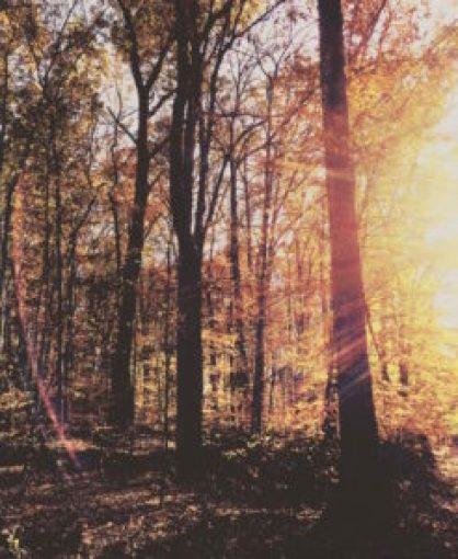 fall-03