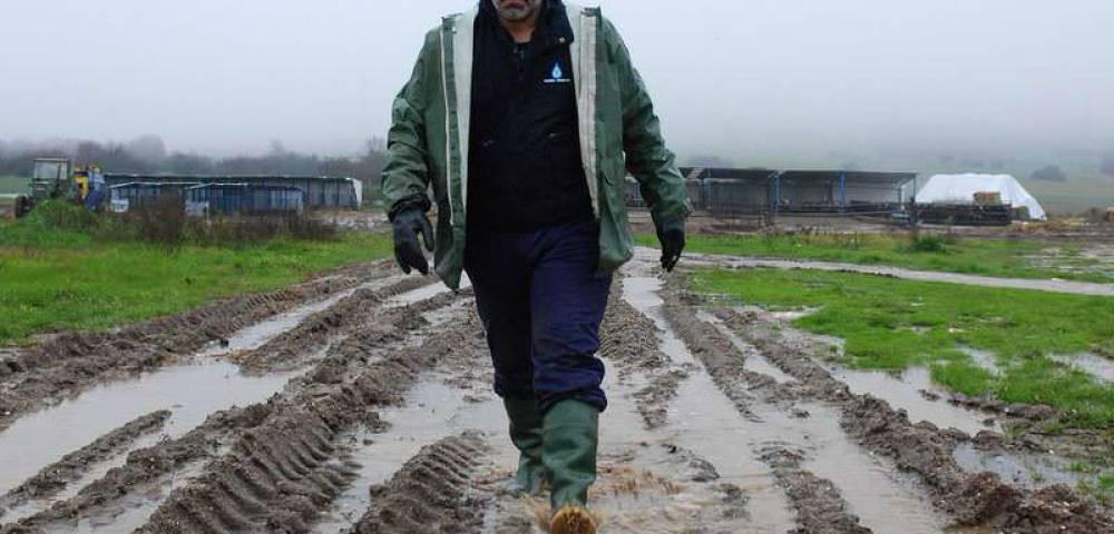 """""""ανειδίκευτος εργάτης"""" σε φάρμα αγελάδων"""