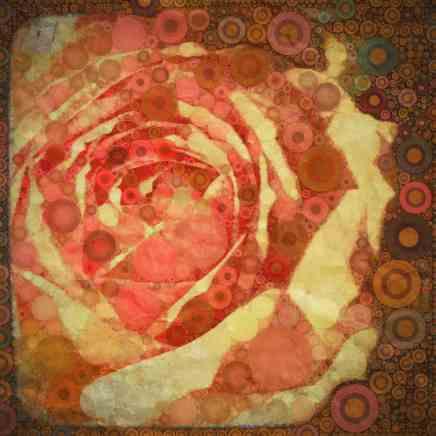 Sun-Washed Rose