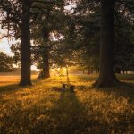 Empty bench in Richmond Park, London at sunset