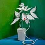 Plants May Be Much Smarter Than We Thought
