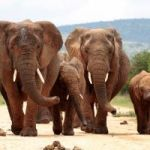 How A New Ivory Ban Is Worrying Musicians