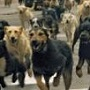 These Filmmakers Staged A Canine Rebellion With 200 Real Dogs
