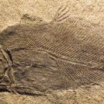 Known Unknowns, Or, How The Fossils We Don't Have Are As Important As Those We Do
