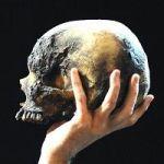A Brief History Of Yorick's Skull