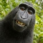 The 'Monkey-Selfie' Copyright Case Is, At Long Last, Over