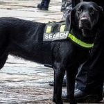 Hero Dogs Are Being Trained To Sniff Out Smuggled Antiquities