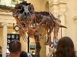 The Field Museum Is Moving, And Replacing, Sue The T-Rex