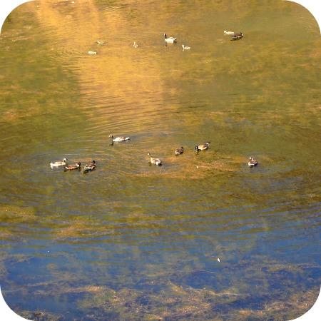 Ducks 7 6 13