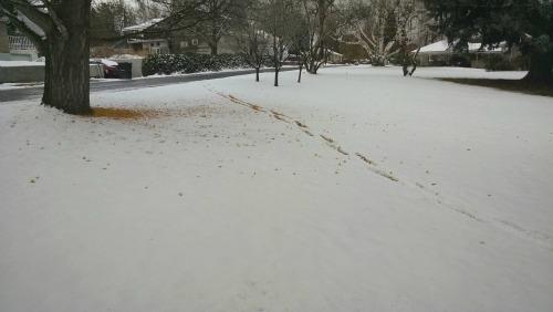 Snow 112415