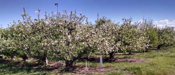 Orchard on McCullough 41516
