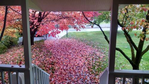 tis-autumn