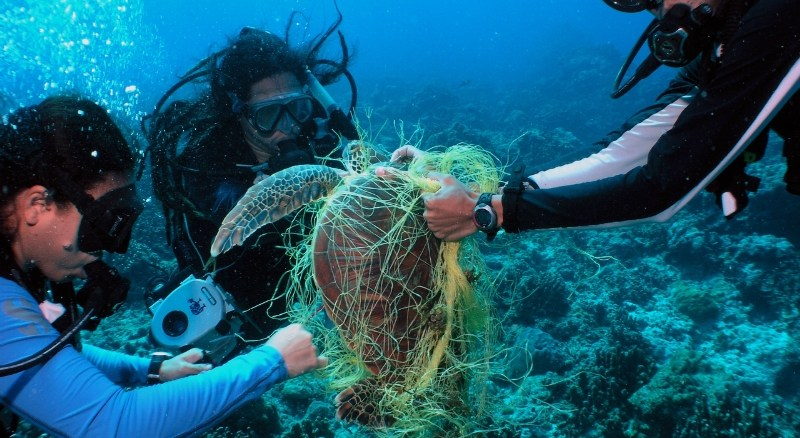 Three biologists on a coral reef survey work to free a green sea turtle entangled in a fishing net, Tamuning, Guam. Photo (c) David Burdick / Marine Photobank (PRNewsFoto/World Animal Protection)