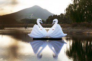 Littlegig Swans