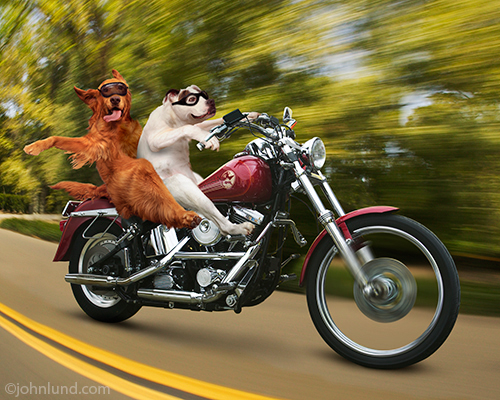 Card Harley Birthday Motorcycle