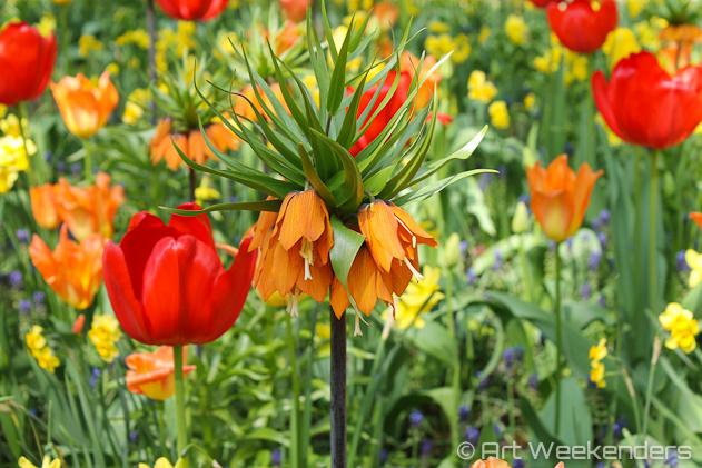 The-Netherlands-Keukenhof-Gardens-Colourful-Flowers